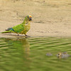27Sep19b Pantanal 131