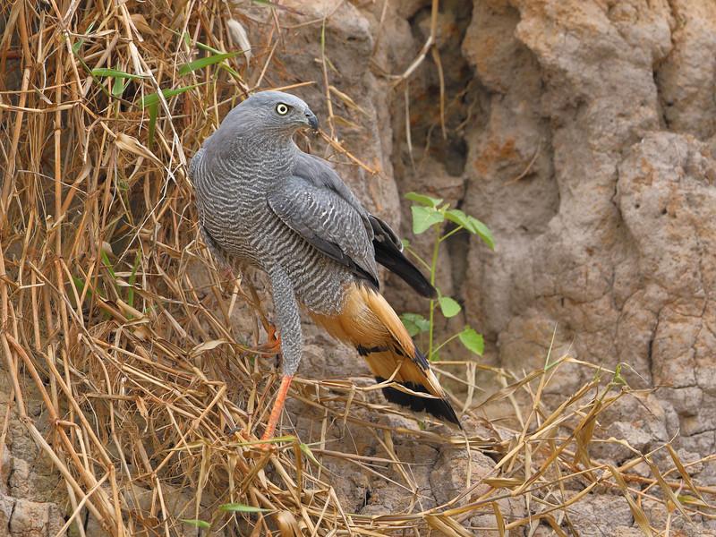 22Sep19 Pantanal 274