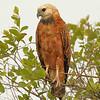22Sep19a Pantanal 223