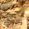 21Sep19 Pantanal 435