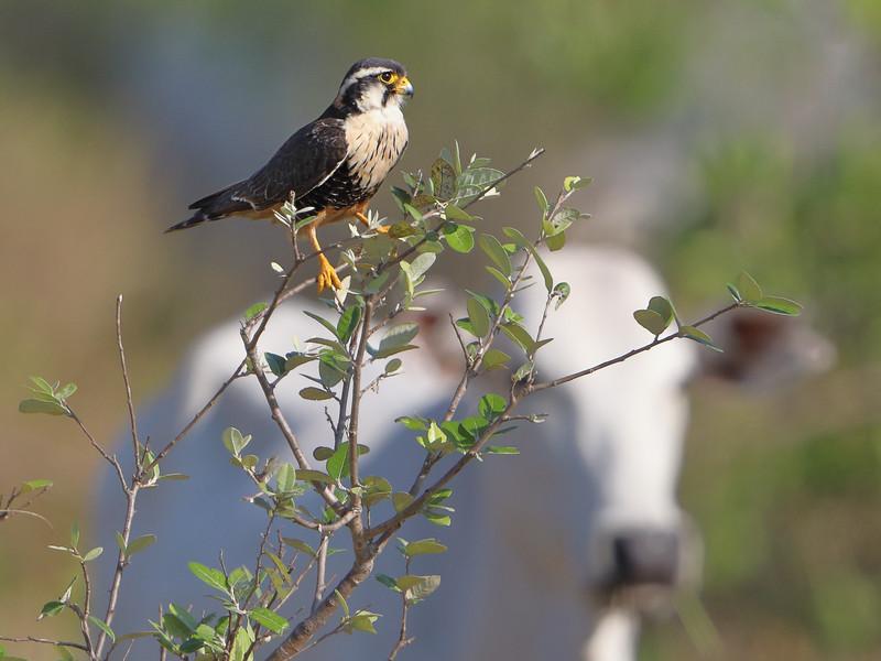 27Sep19b Pantanal 360crop