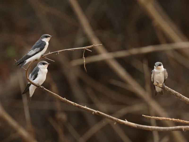 24Sep19c Pantanal 028