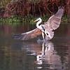 20Sep19a Pantanal 517