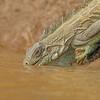 21Sep19a Pantanal 098
