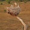 21Sep19 Pantanal 029
