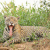 23Sep19 Pantanal 001