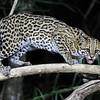 20Sep19a Pantanal 704