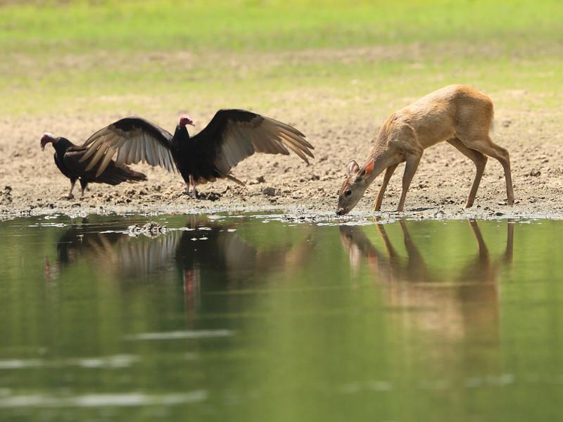 27Sep19a Pantanal 114