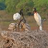 21Sep19 Pantanal 158