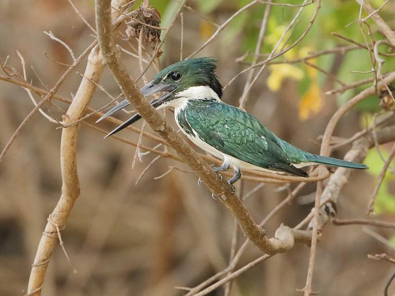 20Sep19 Pantanal 157