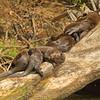 28Sep19a Pantanal 252