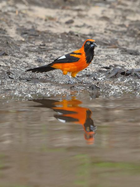 23Sep19 Pantanal 138