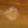 24Sep19 Pantanal 006