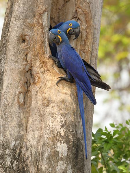 22Sep19 Pantanal 164