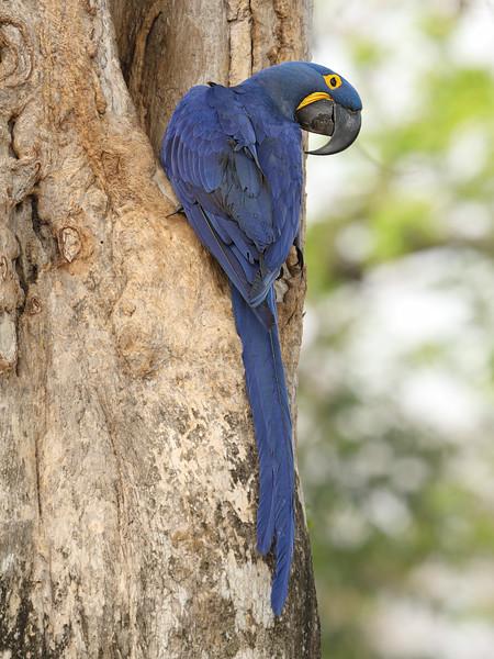 22Sep19 Pantanal 217