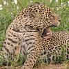 23Sep19 Pantanal 029