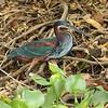 21Sep19 Pantanal 303