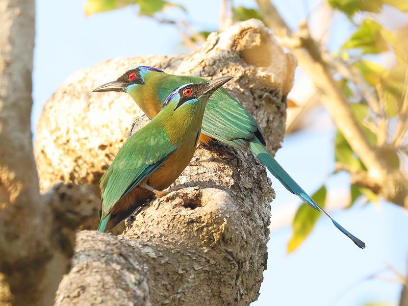 27Sep19 Pantanal 404