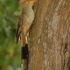 28Sep19a Pantanal 122