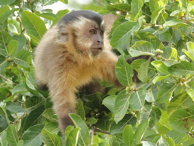 23Sep19a Pantanal 249