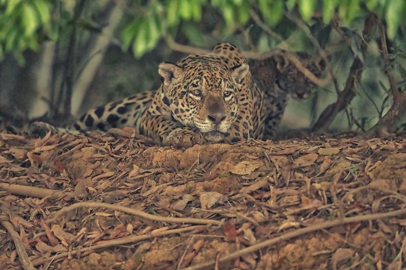 23Sep19 Pantanal 359