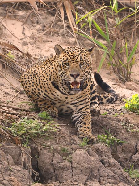 24Sep19 Pantanal 338