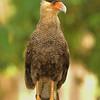 28Sep19a Pantanal 085