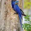 22Sep19 Pantanal 158