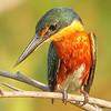 20Sep19 Pantanal 202