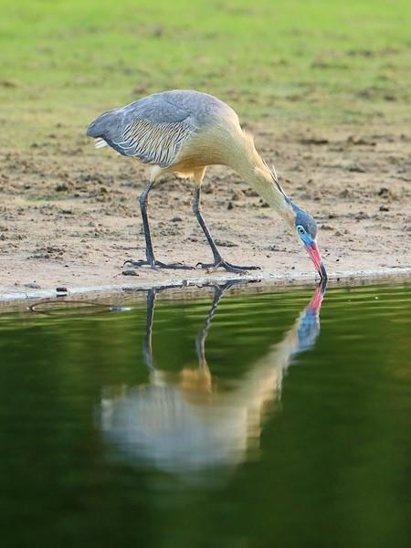 27Sep19b Pantanal 214