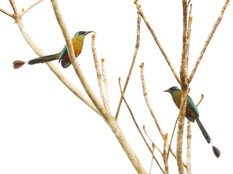 28Sep19a Pantanal 007