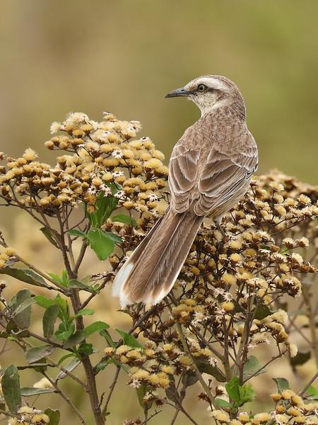 25Sep19a Pantanal 049
