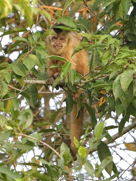 21Sep19a Pantanal 291
