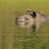 27Sep19a Pantanal 458