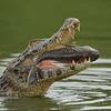 27Sep19b Pantanal 160