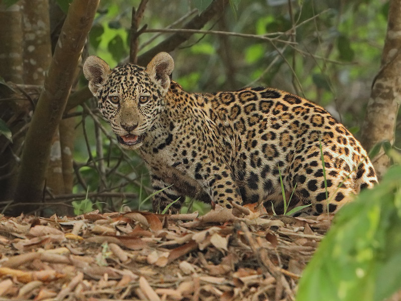 24Sep19b Pantanal 018