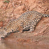 23Sep19 Pantanal 435