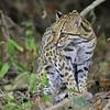 20Sep19a Pantanal 915