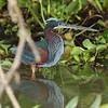 21Sep19 Pantanal 263