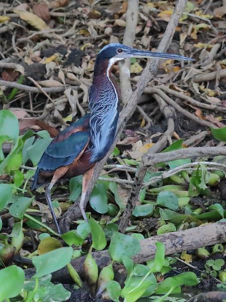 21Sep19 Pantanal 319