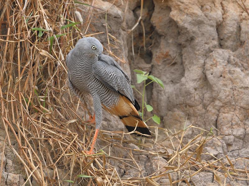 22Sep19 Pantanal 272