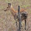 20Sep19a Pantanal 053