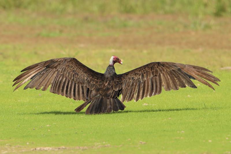 27Sep19a Pantanal 202