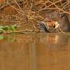 24Sep19 Pantanal 084