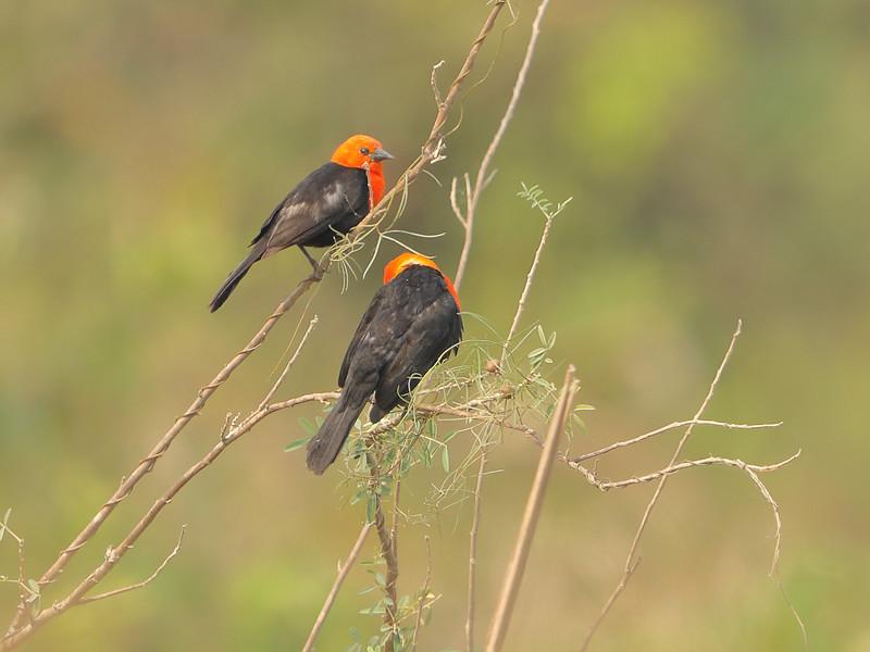 22Sep19 Pantanal 028