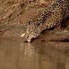 23Sep19 Pantanal 414