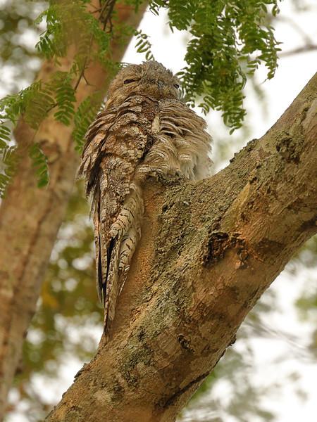 22Sep19a Pantanal 264