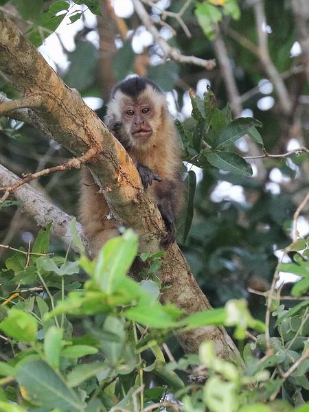 21Sep19 Pantanal 588