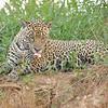 23Sep19 Pantanal 026
