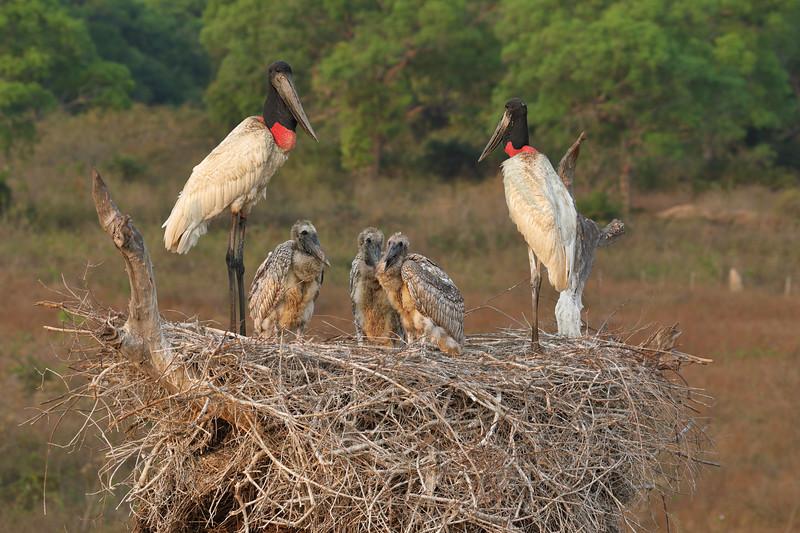 21Sep19 Pantanal 154
